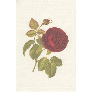 Kaart ja ümbrik ROSSI 240 g/m² 11,5 x 17 cm - Üks roos