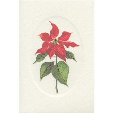 Card and envelope ROSSI 240 gsm 11,5 x 17 cm - Poinsettia
